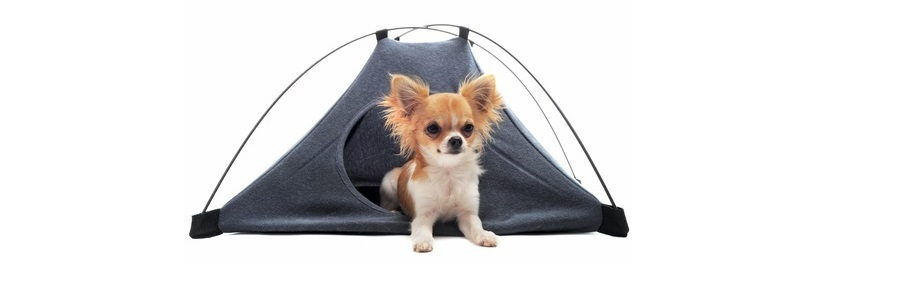 Dog Hiking and Camping